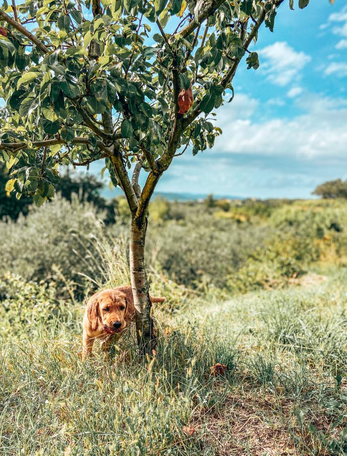 Istrie truffels