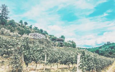 4 x Kroatische wijnregio's