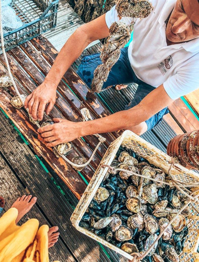 mali ston oesters