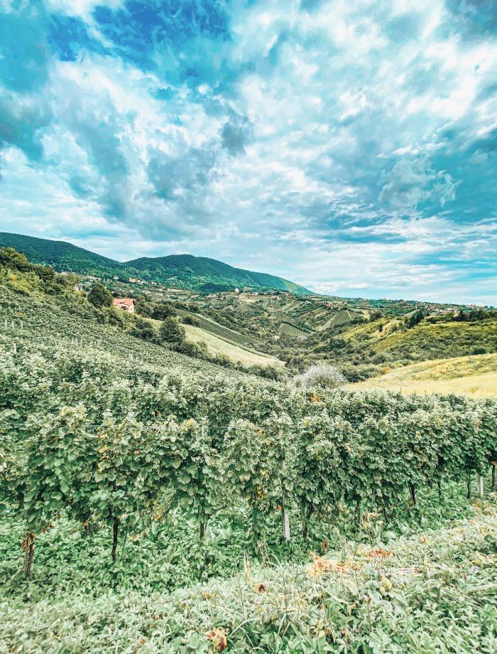 Plesivica winetasting Kroatie